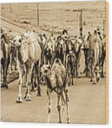 The March Of The Camels Wood Print
