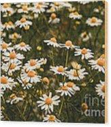 The Margarite Meadow Wood Print