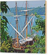 The Maryland Dove Wood Print by Thomas R Fletcher