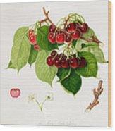 The May Duke Cherry Wood Print