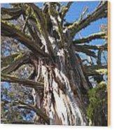 The Mighty Juniper Wood Print