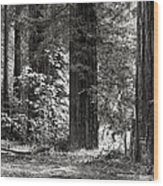 The Mighty Redwood Wood Print