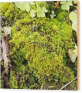 The Miniature World Of The Moss Wood Print