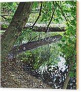 The Mirrored Tree Wood Print