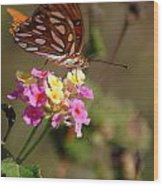 The Monarch 2 Wood Print