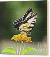 The Monarch Wood Print