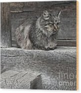 The Moody Grey Wood Print
