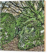 The Mossy Creatures Of The Old Beech Forest Wood Print