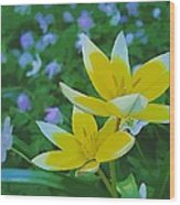The Most Beautiful Flowers Wood Print