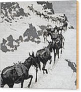 The Mule Pack Wood Print