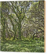 The Mysterious Forest - The Magical Trees Of The Los Osos Oak Reserve. Wood Print