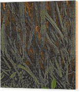 The Mystery Of Surface Roots Wood Print