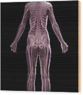 The Nervous And Skeletal Systems Female Wood Print