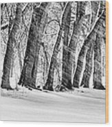 The Noreaster Bw Wood Print