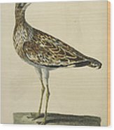The Norfolk Plover Wood Print