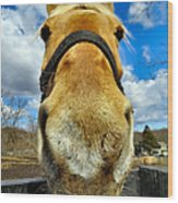 The Nose Knows Wood Print