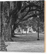 The Oaks Of Audubon Park Wood Print