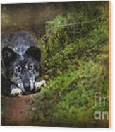 The Old And Not Too Bad Wolf Wood Print