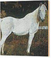 The Old Arabian Wood Print