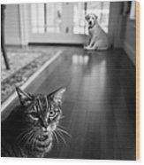 The Old Cat And The New Puppy Wood Print by Diane Diederich
