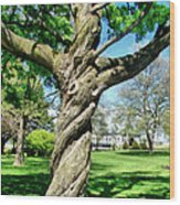 The Old Lady Of The Green Wood Print by Michelle Calkins