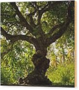 The Old Mango Tree Wood Print