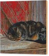 The Old Mill Cat Wood Print by Julie Dant
