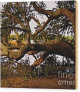 The Old Tree At The Ashley River In Charleston Wood Print by Susanne Van Hulst