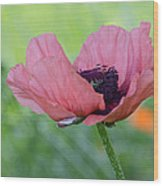 The One And Only Pink Poppy Wood Print