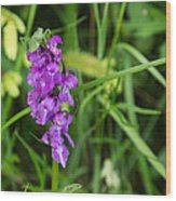 The Orchid And The Grasshopper  Wood Print