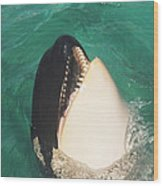 The Original Shamu Orca Whale At Sea World San Diego California 1967 Wood Print