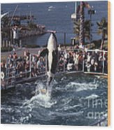 The Original Shamu Orca Sea World San Diego 1967 Wood Print