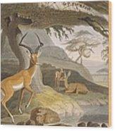 The Pallah, 1804-05 Wood Print