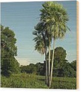 The Pantanal Wood Print