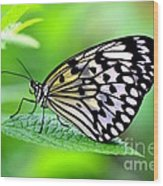 The Paper Kite Or Rice Paper Or Large Tree Nymph Butterfly Also Known As Idea Leuconoe 2 Wood Print