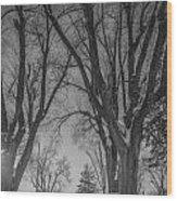 The Park In Black And White Wood Print