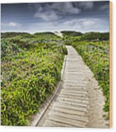 The Path Wood Print by John Early