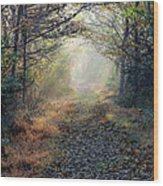 The Paulinskill Trail By James Figielski Wood Print