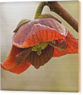 The Paw Paw Bloom Wood Print