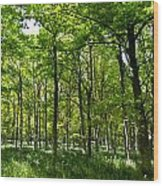 The Peaceful Forest  Wood Print