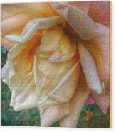 The Peach Rose Wood Print