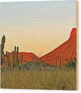 The Peak And Cardon Cacti In The Sunset In San Carlos-sonora Wood Print