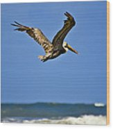 The Pelican And The Sea Wood Print