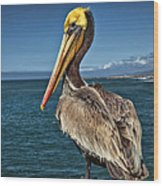 The Pelican Of Oceanside Pier Wood Print