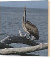 The Pelican Pose Wood Print