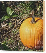 The Perfect Pumpkin In The Patch Wood Print