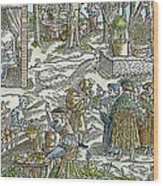 The Physic Garden, 1531 Wood Print