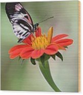 The Piano Key Butterfly Wood Print