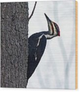The Pilleated Woodpecker Wood Print by Rhonda Humphreys