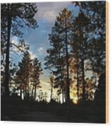 The Pines At Sunset Wood Print